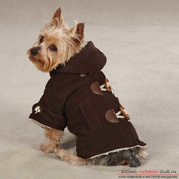 Warm clothes for Yorkies with their own hands. Photo №7