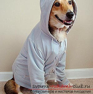How to make a pattern of clothes for dogs with their own hands. Photo №1