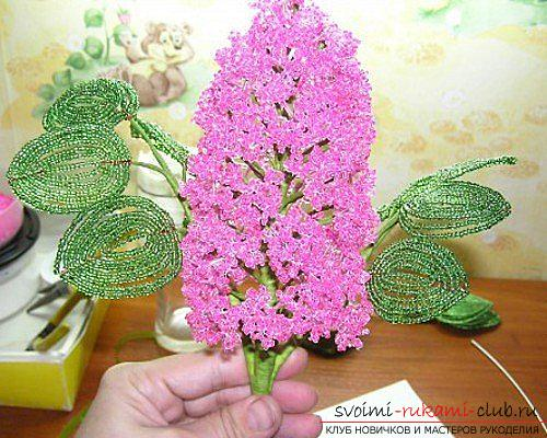 How to make a lilac branch of beads, step-by-step photos and a description of several weaving techniques for beaded floristics. Photo №1