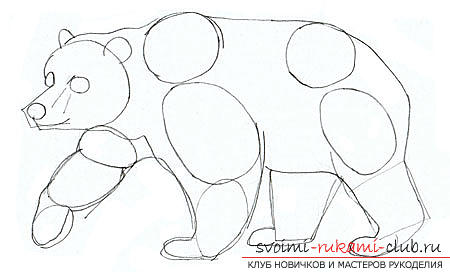 Step-by-step drawing of a bear in a realistic style. Photo №4