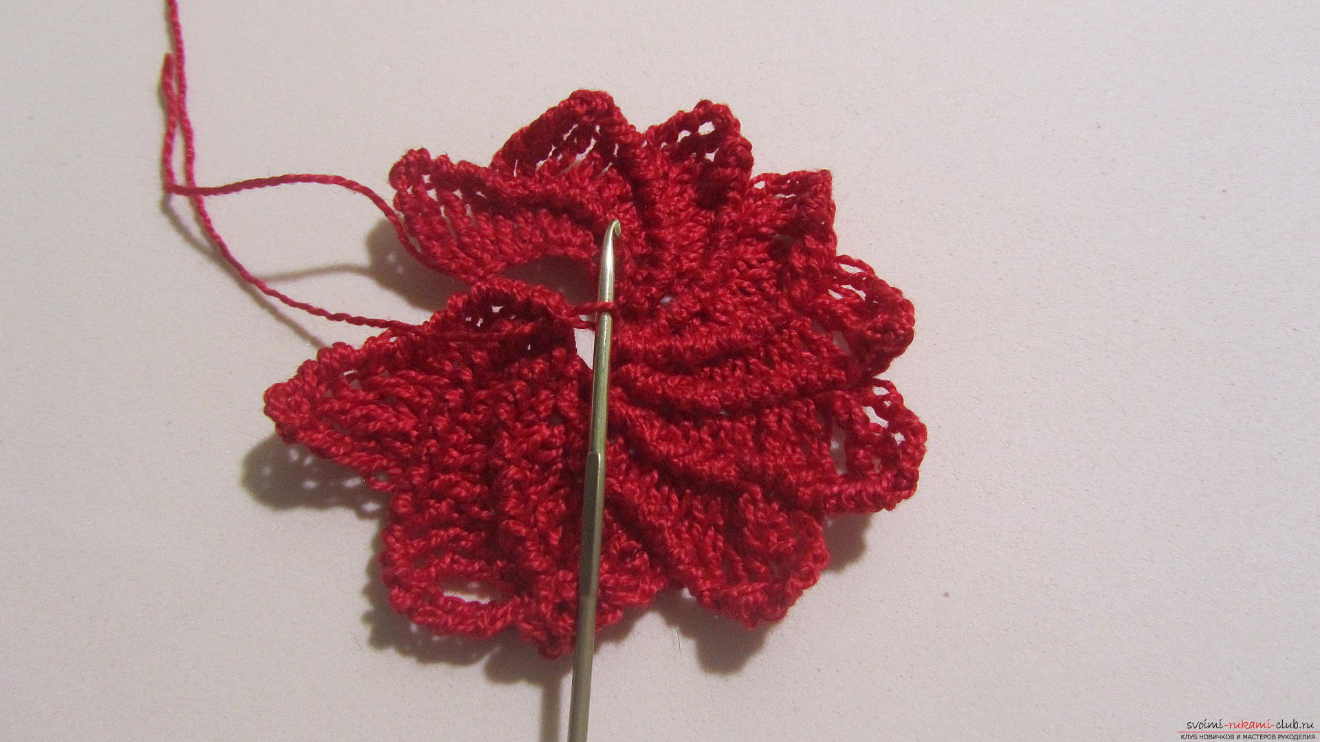 This article will give a lesson on how to crochet the flowers of the Poissentia, a master class with photographs. Photo №13