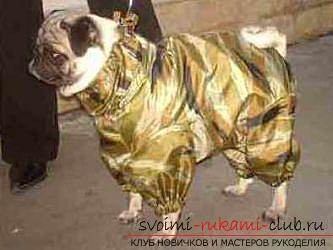 A comfortable pug suit with your own hands. Photo Number 18