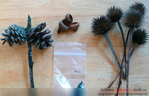 How to make a hedgehog out of cones. A lesson with my own hands. Photo-materials and instruction .. Photo №1
