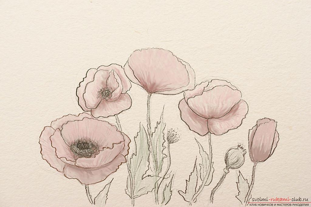 Drawing a poppy in pencil step by step. Photo №1