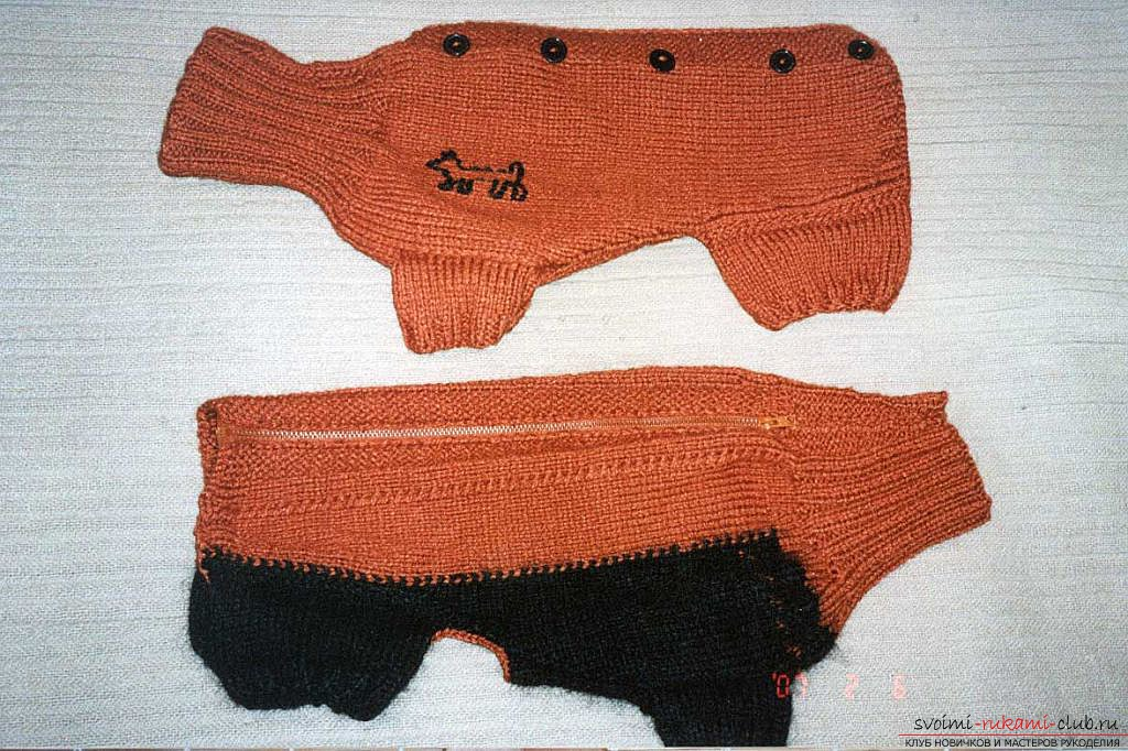 A simple piece of clothing and patterns for the dachshund of men's sweaters. Photo # 2