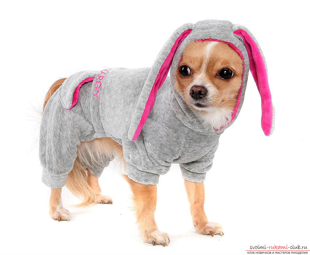 Warm clothes for small dogs with patterns for beginners. Photo №1