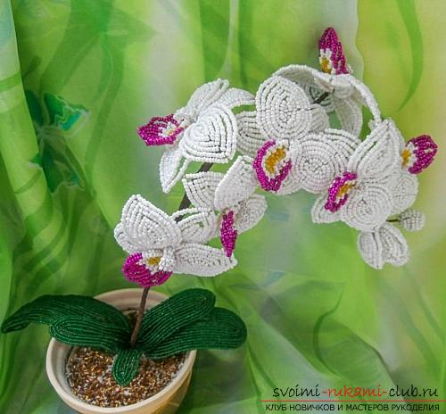 How to weave white orchid from beads, master class with photo and description .. Photo # 5