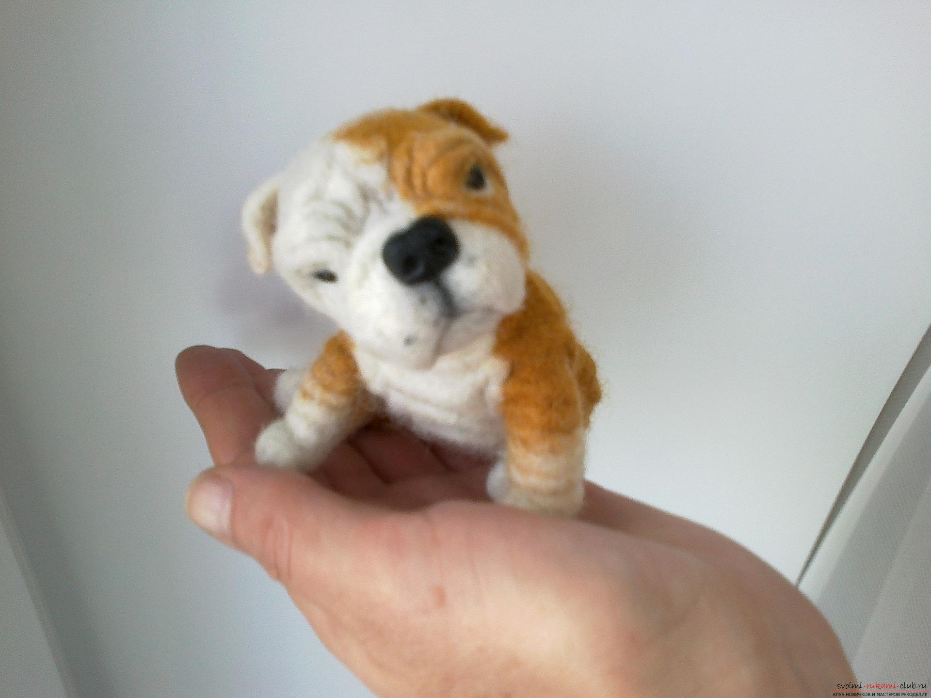 Master class on felting English Bulldog toys made of wool as a gift. Picture №10