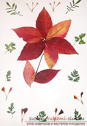 Interesting ideas for creating autumn crafts for the school with their own hands. Photo # 2