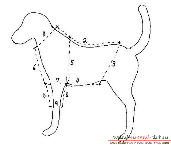 photo of the original shirt pattern for your dog. Photo # 2
