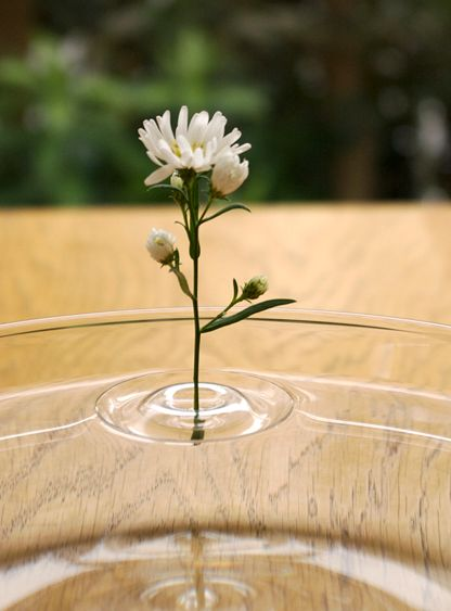 nozzles for flowers - vases in the form of circles on the water