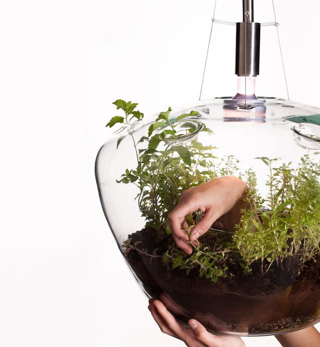 лампа для рослин в інтер'єрі