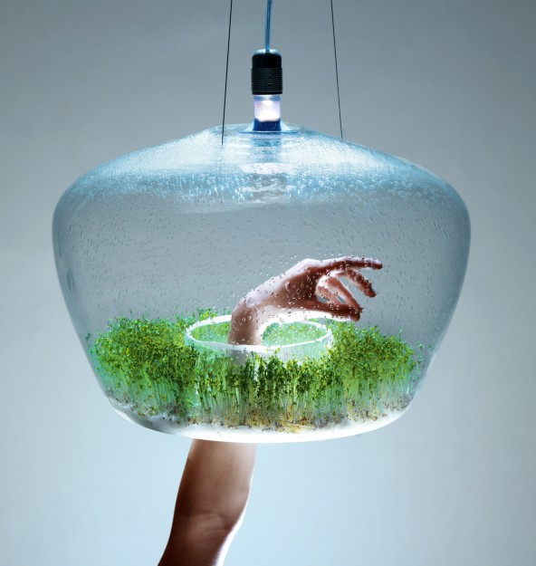 Ceiling lamp for plants
