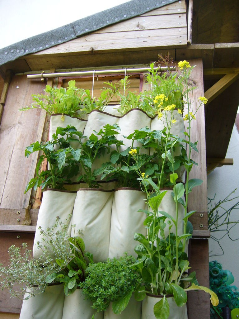 Hanging garden in pockets in the country - we grow greens