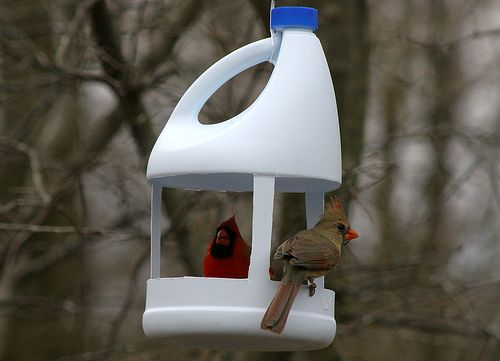 Bird feeder from a plastic bottle of household chemicals