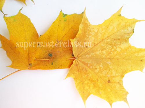 Crown maple leaves with their own hands