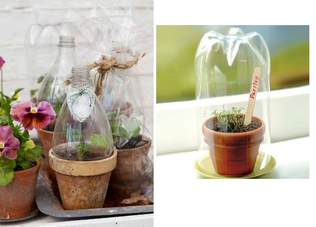 Lids for seedlings - crafts from plastic bottles with their own hands for the garden