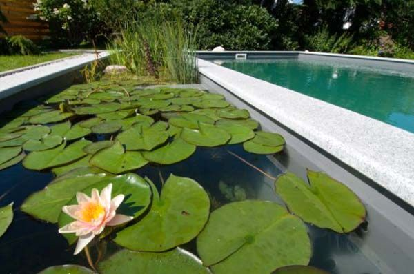 Pool pond with water lilies