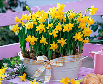 For Easter decoration, it is recommended to plant more than one bulb in a container