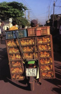 Transportation of chickens.