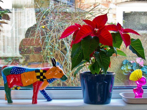 Flowers, figurines and other ways to decorate a window sill and window