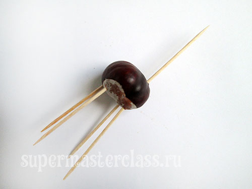 In the chestnut torso stick toothpicks