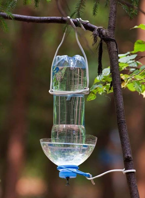 Drinking bowl for birds from a plastic bottle