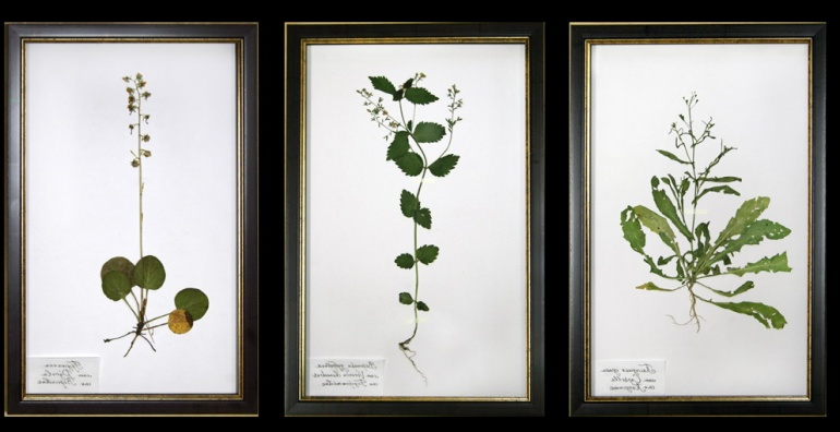 Herbarium for decorating an office or library