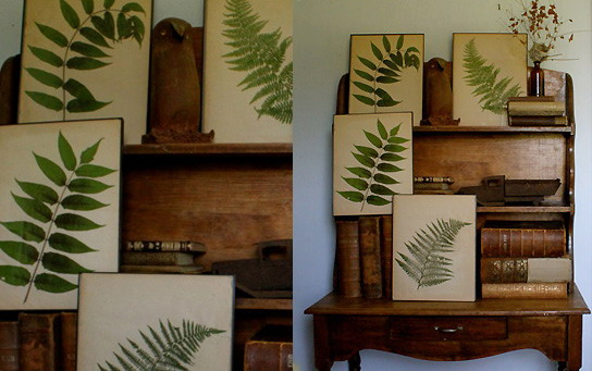 Herbarium for decoration is easy to do with your own hands.