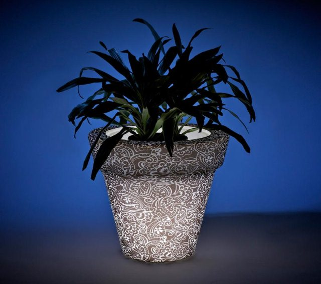 Luminous pot for indoor plants