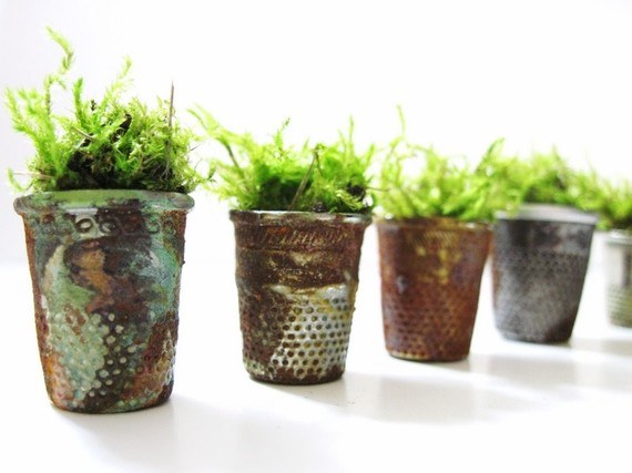 plants in thimbles: a miniature garden