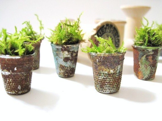 garden with moss in pots of thimbles