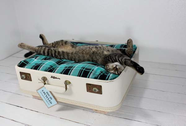 A cat's lounger for a cat with his own hands from an old suitcase